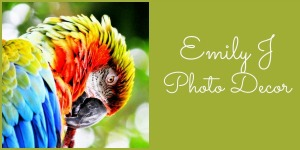 Emily Stauring, Emily J Photo Decor, Rochester Artisans