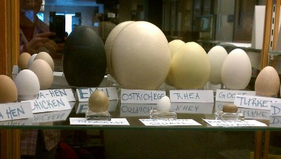 Labeled Eggs