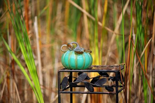 Photo by Annette Dragon. Pumpkin from Corning Museum of Glass.